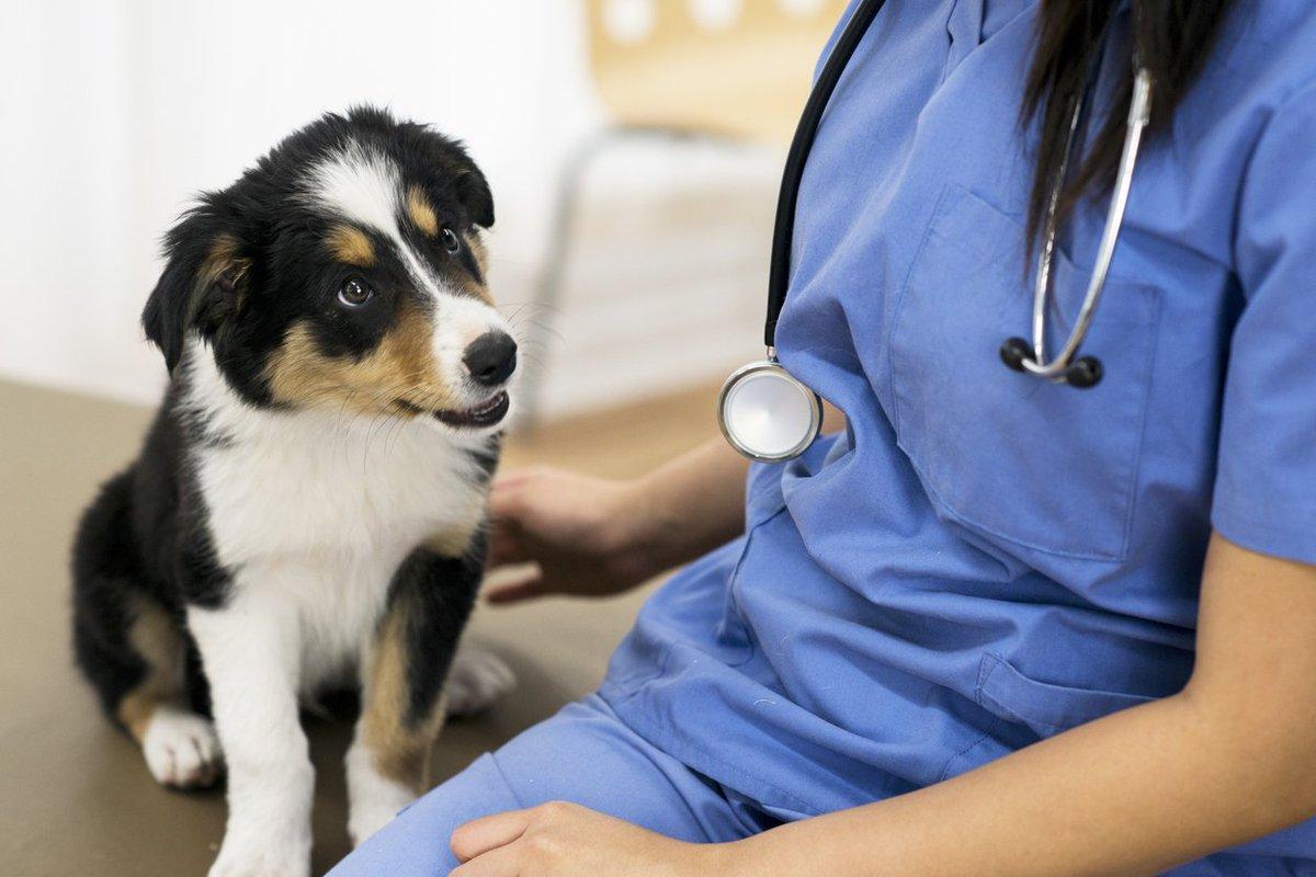 radiologia-veterinaria-medcloud